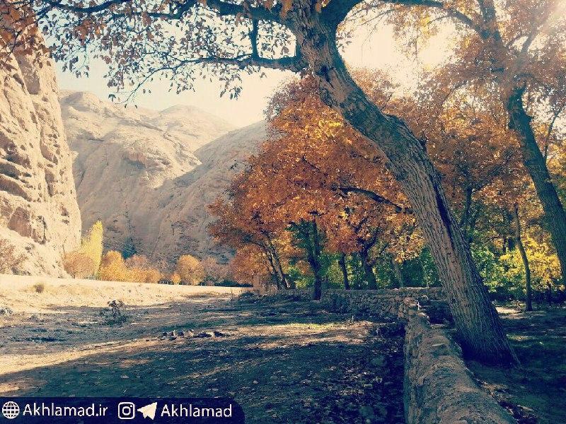 درخت گردوی نیمه خمیده در پاییز اخلمد، قاسم اکرمی